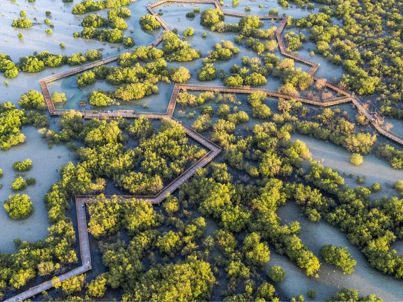 Jubail Mangrove Park in Abu Dhabi: Where it is, how to get there and opening times