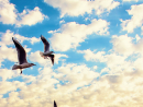 TAKING FLIGHTBirds are always considered as a symbol of peace and I wanted to show Abu Dhabi as a peaceful city with this shot of birds flying with the city's distinctive buildings behind them.