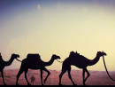THE SIMPLE LIFEThe reason I like this photo is because it reminds me of where it all began – simplicity at it's best. Against the odds of the desert and heat, the Bedouin life and camels symbolise endurance, survival and strength.