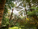 LEAFY RETREATWe know, we know – it's another picture of trees, but you can't ignore the beauty of all the greenery in Al Ain.