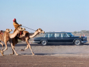 A ROYAL VISITIn 1979 Queen Elizabeth II visited the Middle East, and touched down at Al Ain airstrip. Here, the royal motorcade gets a camel chaperone.