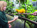 Meet the animalsat The Green PlanetWe're guessing you may already know, but there's a tropical rainforest in the heart of Dubai. What you may not know, however, is that there are so many new experiences at The Green Planet for you to check out with the kids – trust us on this one. A bio-dome in retail and dining complex City Walk, you take a stroll through an enclosed ecosystem to meet more than 3,000 plants and animals living inside the world's largest indoor man-made and life-sustaining tree. It's fun, but also educational, with plenty of programmes. Don't forget to experience the Australian wildlife and watch piranhas feed on raw chicken.From Dhs89. Sun-Wed 10am-7pm, Thu-Sat 10am-8pm. City Walk, Al Safa Street, thegreenplanetdubai.com (04 317 3999).