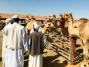 Heritage FestivalAl Dhafra Festival 2019 is a family-friendly event featuring camel racing, auctions, a traditional market and more.  You had us at camel racing...Dec 9-24. Al Dhafra and Madinat Zayed Park, visitabudhabi.ae.