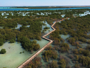 Jubail Mangrove Park is openThe stunning new attraction is open and is free to wander through. Jubail Island lies between Yas and Saadiyat and is awash with natural beauty.Jubail Island.