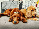 Dog: Riley and Pie Owner: Samir Kilachand
