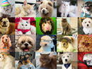 Cutest pet: Time Out UAE Virtual Pet Show