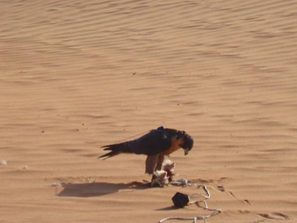 Photography tour of Dubai Desert Conservation Reserve