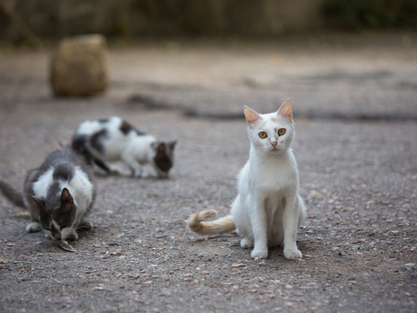 Cat-friendly Abu Dhabi clinic holds neuter and release day