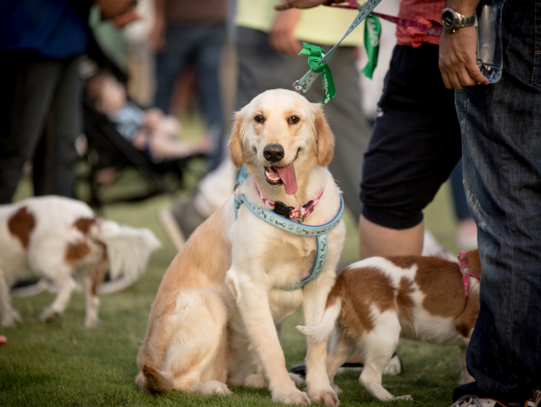 New pet event comes to Abu Dhabi