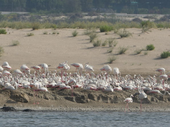 Abu Dhabi beauty spot named on international conservation protection list
