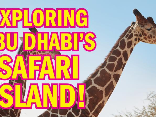 We go on SAFARI at Sir Bani Yas Island