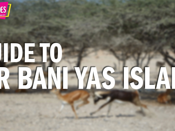 Abu Dhabi Quick Guides: All you need to know about Sir Bani Yas Island