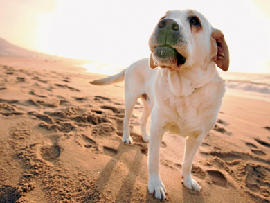 Summer survival for pets