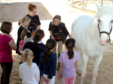 Horse riding lessons in Abu Dhabi