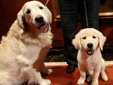 New pet-sitting service launches in Abu Dhabi