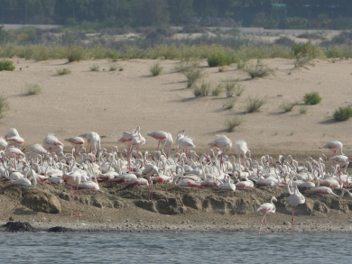 Two free things to do in Abu Dhabi today: Go flamingo spotting and embrace Korean culture