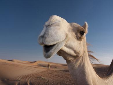 Three animal experiences across the emirates