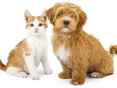 How to spend time with lovely dogs and cats in the UAE