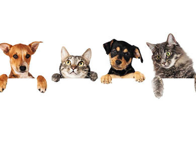 Everything you need to know about owning a pet in the UAE