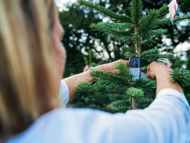 Track your Christmas tree's journey from Denmark to Abu Dhabi