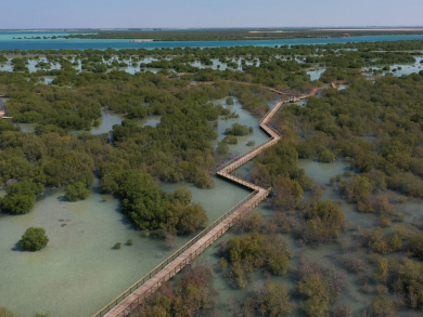 Abu Dhabi's stunning mangrove walk to open this month