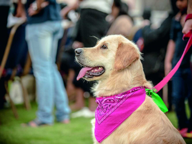 Ten top reasons to check out Yas Pet Festival in Abu Dhabi this year