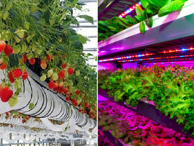 UAE hits major milestone by producing 70 types of vegetables and fruits locally