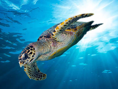 The National Aquarium in Abu Dhabi will have a turtle rehab centre