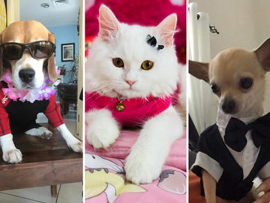 Most stylish pet: Time Out UAE Virtual Pet Show