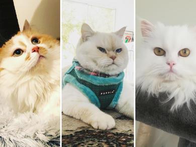 Best rescue cat: Time Out UAE Virtual Pet Show