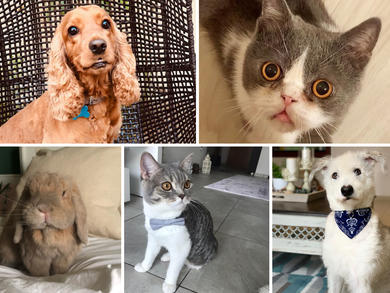 Time Out UAE Virtual Pet Show: judges' views group 2