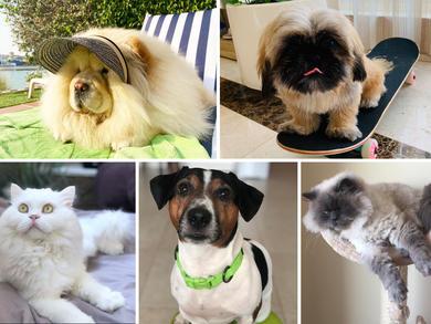 Time Out UAE Virtual Pet Show: judges' views group 3