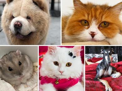 Time Out UAE Virtual Pet Show: judges' views group 4