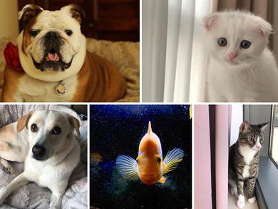 Time Out UAE Virtual Pet Show: judges' views group 6