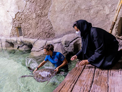 Abu Dhabi's National Aquarium is rehabilitating animals ahead of opening