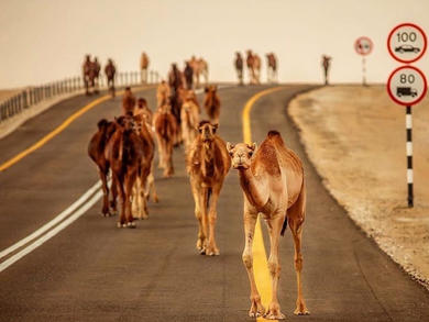 Amazing Abu Dhabi wildlife pictures from the desert and ocean