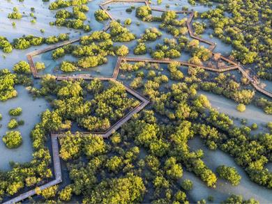 Jubail Mangrove Walk in Abu Dhabi is reopening to the public