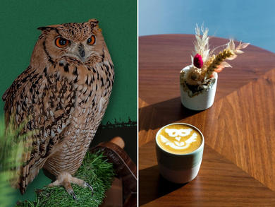 Abu Dhabi home to region's first Owl Café